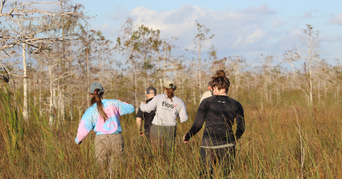students wading through a cypress dome in Everglades National Park