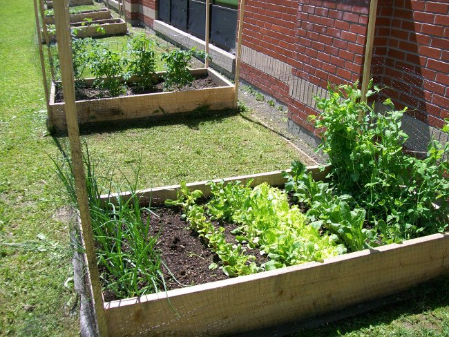 Growing Healthy Gardens Program