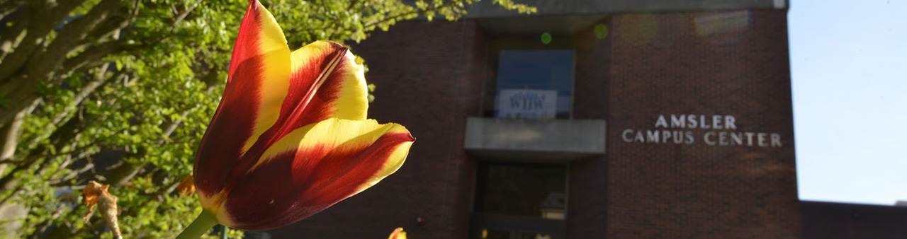Tulip in front of Amsler Center